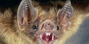 Un murciélago habría sido la causa del brote de ébola