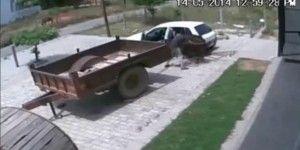 En 60 segundos, roban vaca en Rusia