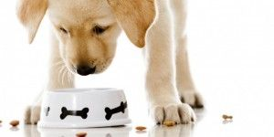 Alimentos prohibidos para tu perro