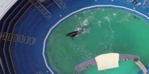 Orca lleva 45 años nadando en este pequeño estanque