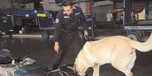 Unidad Canina descubre mochila con droga en Acapulco