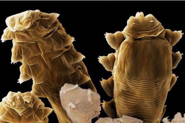Mene moy system face body 20 el gel que limpia para la persona y el cuerpo