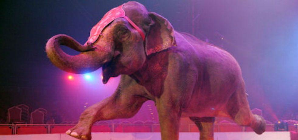 Resultado de imagen para elefante de circo
