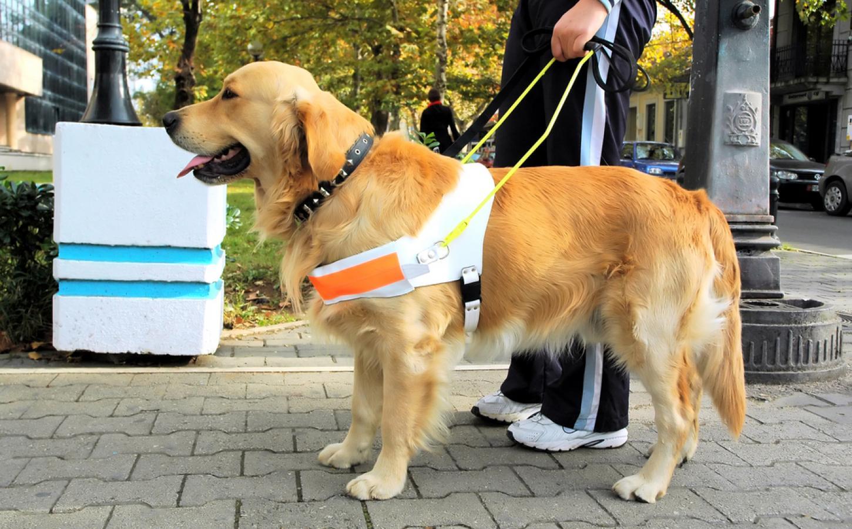 Cancer Sniffing Dog Breeds