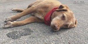 Perro cuida a su dueña en el lugar de su muerte