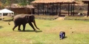 Video: elefante defiende a su cuidador