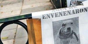 Perros de la Condesa fueron envenenados por error
