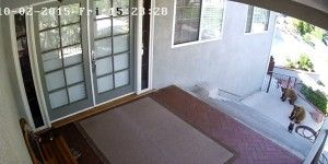 Video: perro ahuyenta a osos en California