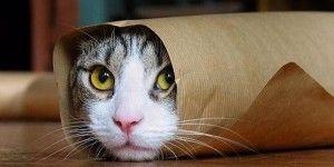 Agradecen a usuarios y gatos no revelar detalles de operativos antiterroristas