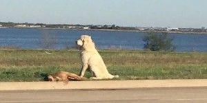 Encuentran a perro cuidando a su amigo muerto