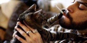 Fumar también es malo para salud de animales domésticos