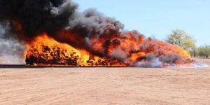 Incineran en Sonora más de 24 toneladas de mariguana