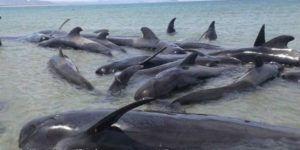 Mueren 24 ballenas en Baja California