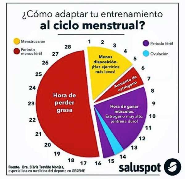 Ciclo Menstrual Related Keywords & Suggestions - Ciclo Menstrual Long ...