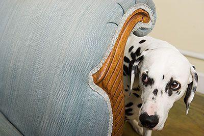 perro-con-miedo-i
