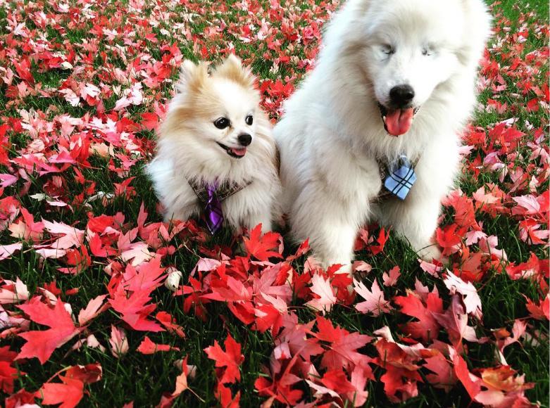 Los dos inseparables amigos. Foto de Instagram