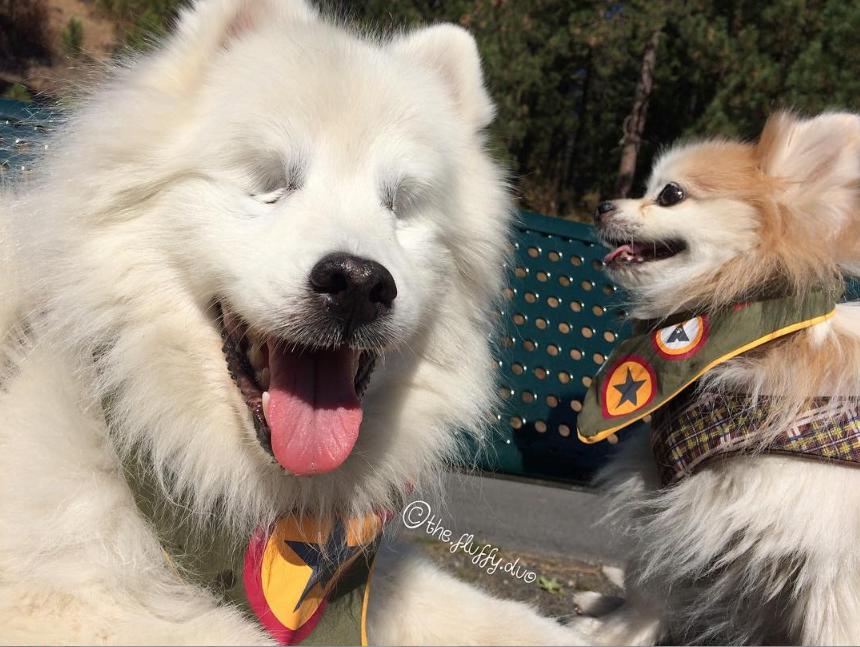Perrito ciego consiguió su mejor amiga guía — Instagram