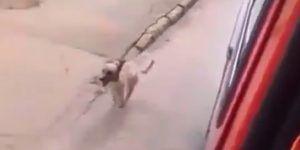 #Viral: perro persigue ambulancia que traslada a su dueño