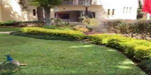 Video: exhiben pavorreales, cine y cava de vinos en casa de Javier Duarte