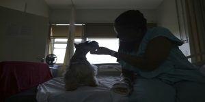"Hospital brasileño ofrece ""perroterapia"""