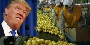 Trump frena importación de limones argentinos