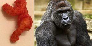 Venden cheeto con forma del gorila Harambe en 100 mil dólares
