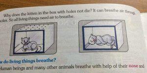 Libro de texto enseña cómo asfixiar a un gato