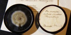Subastan moho que usó Fleming para crear la penicilina
