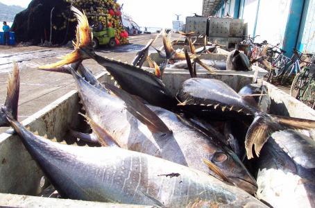 Gana México batalla a EU por atún