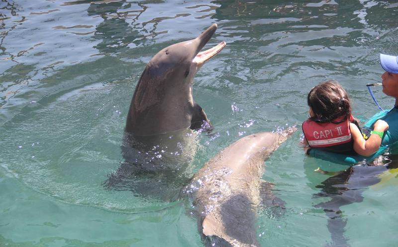 Impulsan prohibir en México uso de mamíferos marinos en espectáculos — ECUADOR