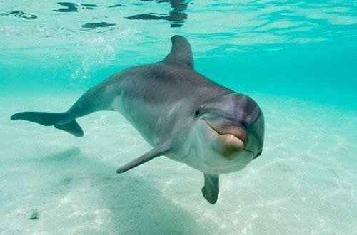 Prohiben uso de mamíferos marinos en espectáculos