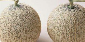 Subastan dos melones por más de 13 mil dólares en Japón