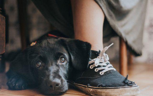 perros 1