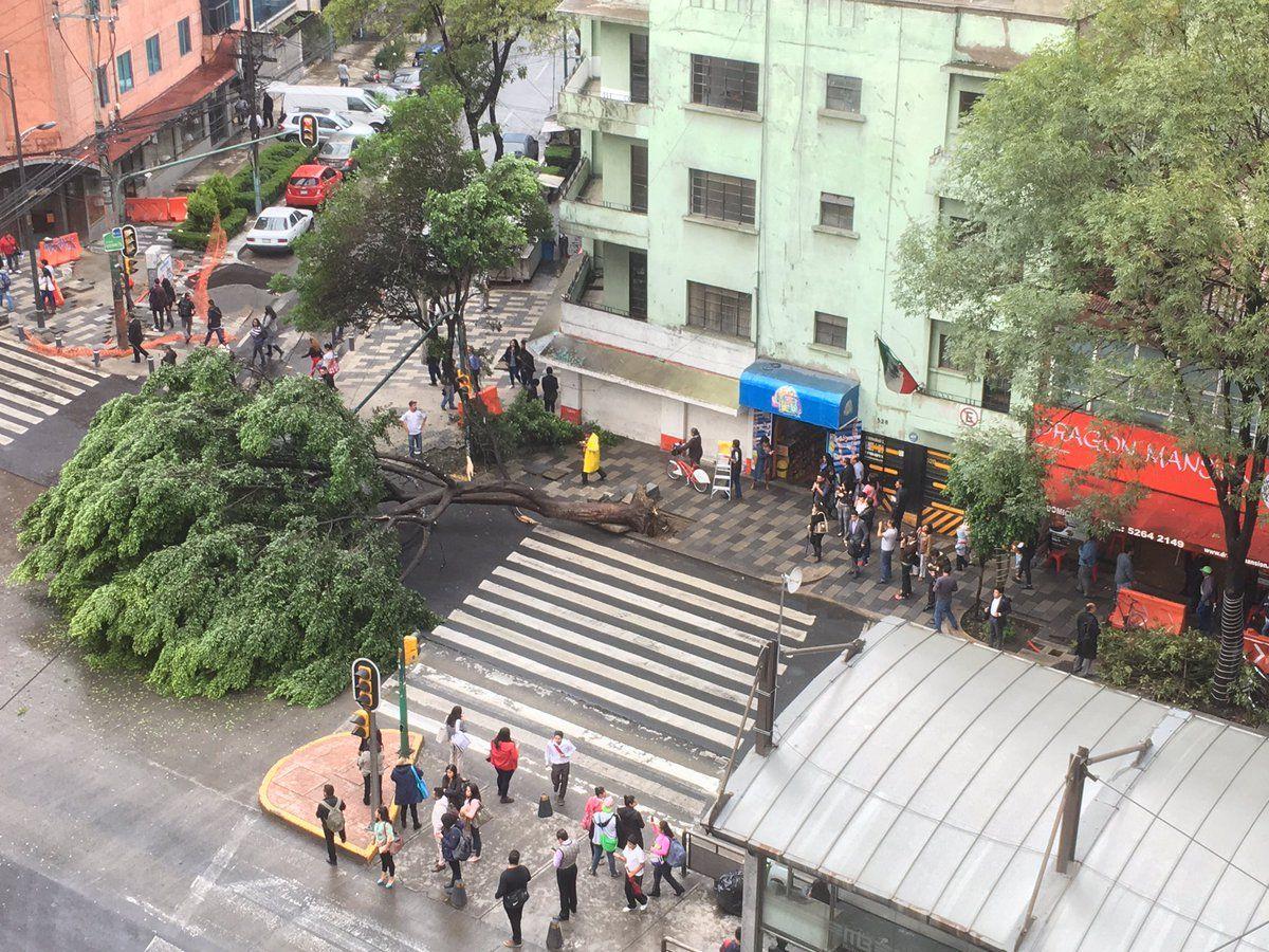 Árbol cae en Insurgentes y obstruye el paso hasta del Metrobús