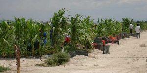 Abandonan a 27 jornaleros potosinos en Sinaloa